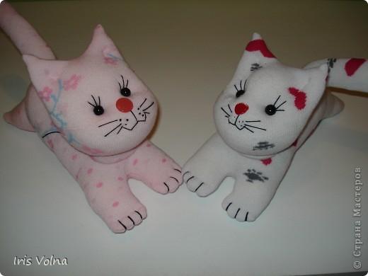 gato-calcetin-2