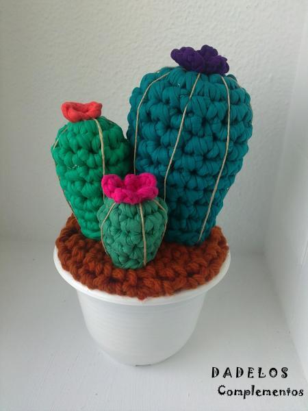 trapillo-cactus