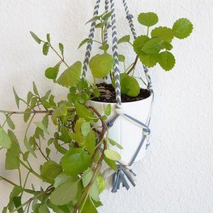 plant-hanger-out-of-t-shirt-yarn