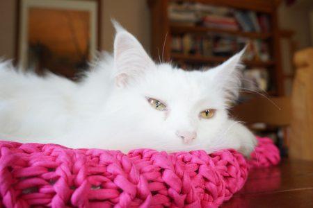Camas de trapillo para gatos